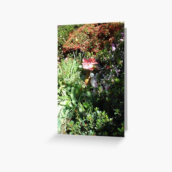 Introducing Leura Gardens~bd8 Greeting Card