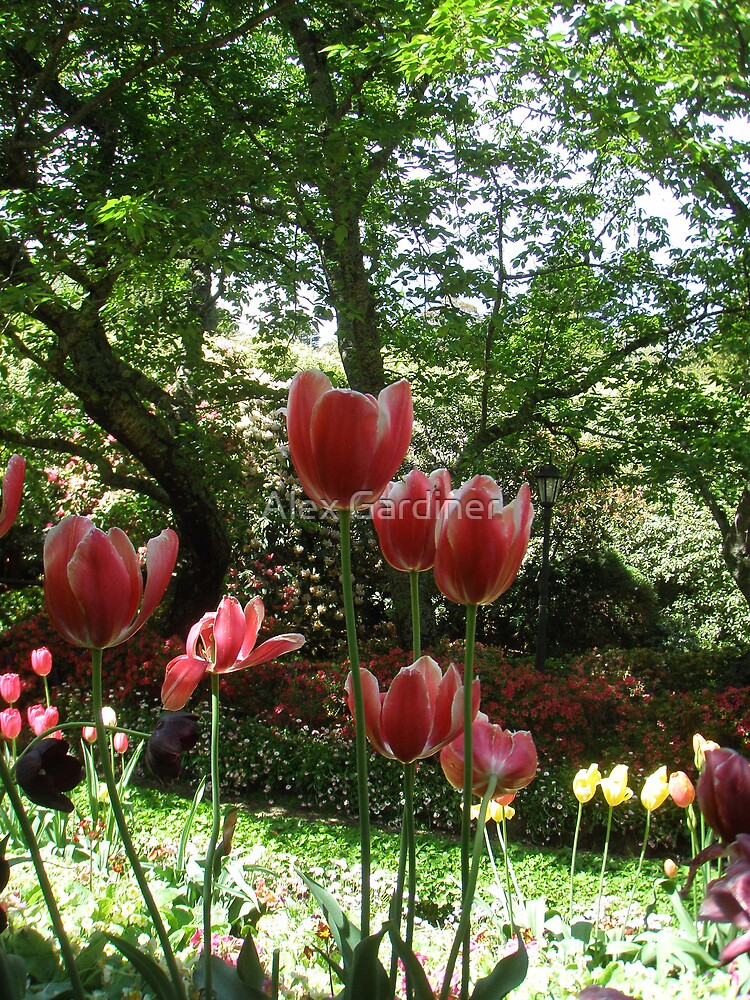 Introducing Leura Gardens ~bd14 by Alex Gardiner