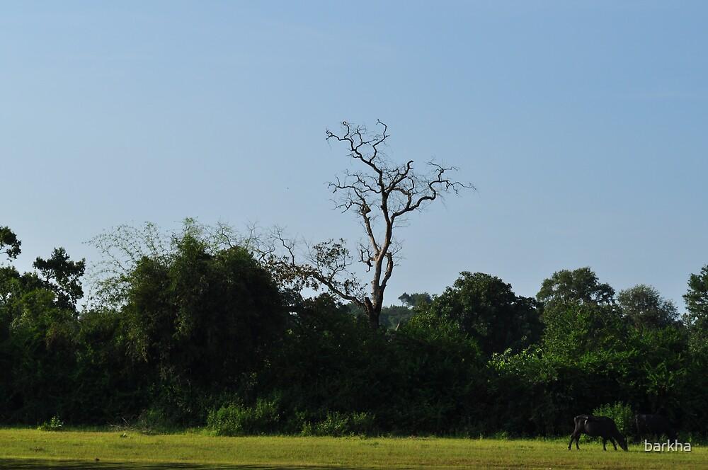 Old Tree by barkha