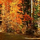 AUTUMN DRIVE IN THE SIERRA'S by Elaine Bawden