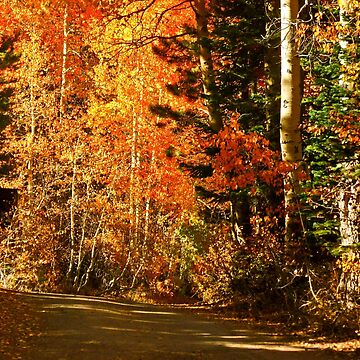 AUTUMN DRIVE IN THE SIERRA'S by elainebawden