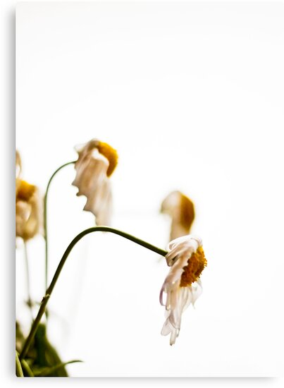 ~ nothing wilts faster than laurels that have been rested upon ~ by Adriana Glackin