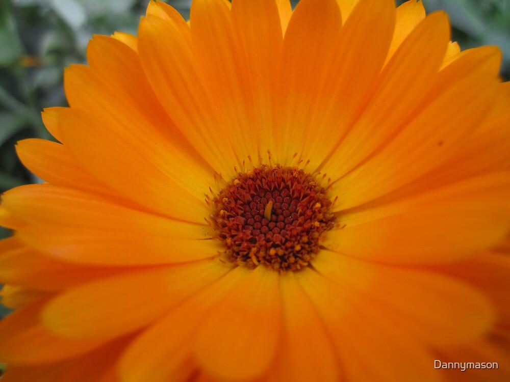Orange flower by Dannymason