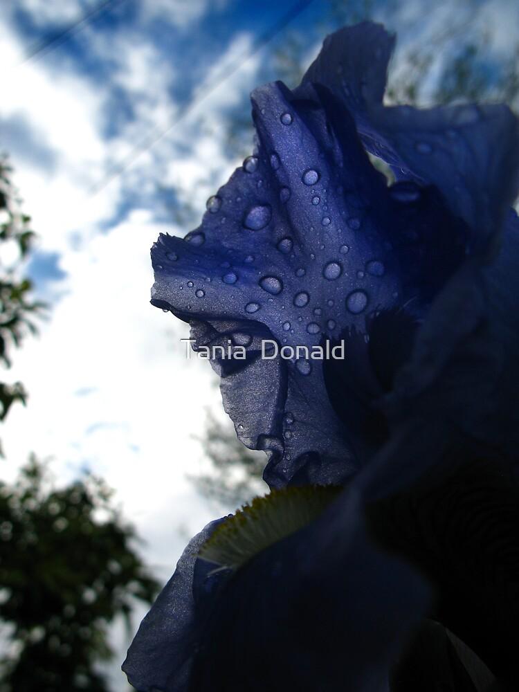shadow-iris by Tania  Donald