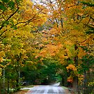 Country Road Fall Vermont by Deborah  Benoit