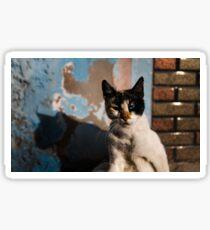 Moroccan cat Sticker
