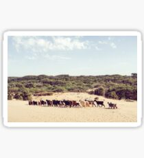 Goats on the beach in Morocco Sticker