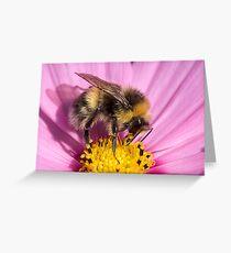 Bumble bee - Bombus lucorum Greeting Card