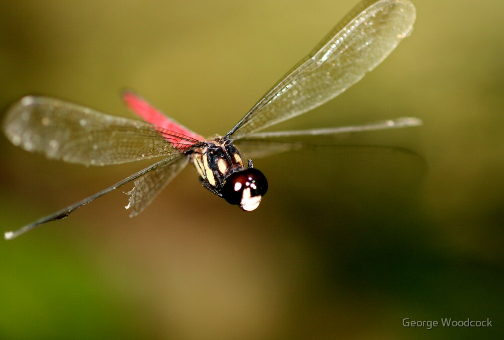 flying dragonfly by George Woodcock