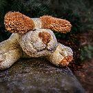 Scruffy Urchin by Ted Byrne