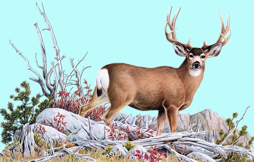 Deer on Mountian by Walter Colvin