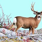 Deer on Mountian by Walter Colvin