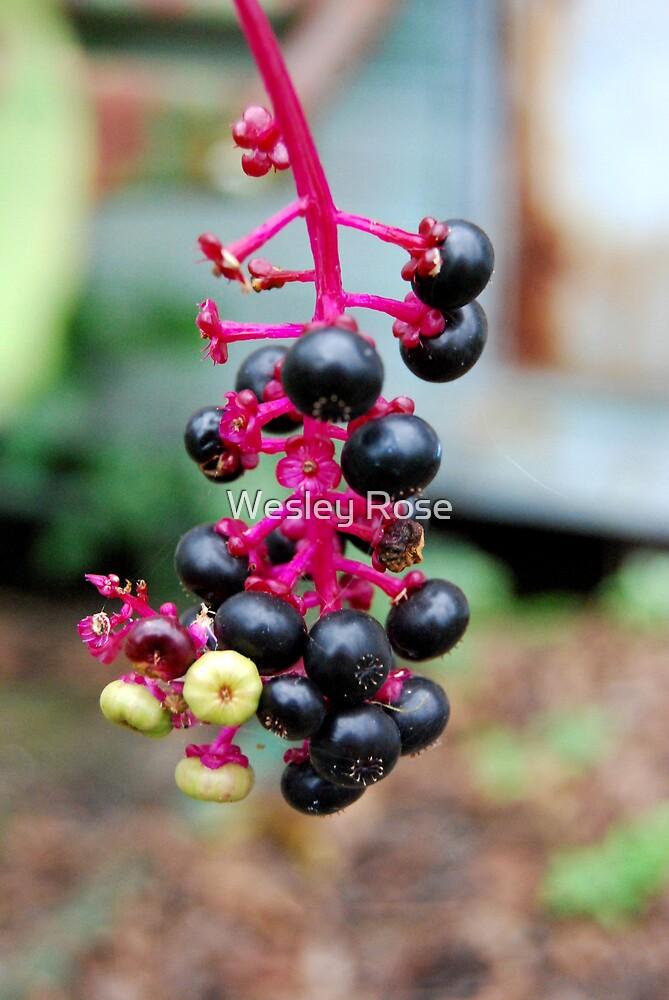 Berries by Wesley Rose