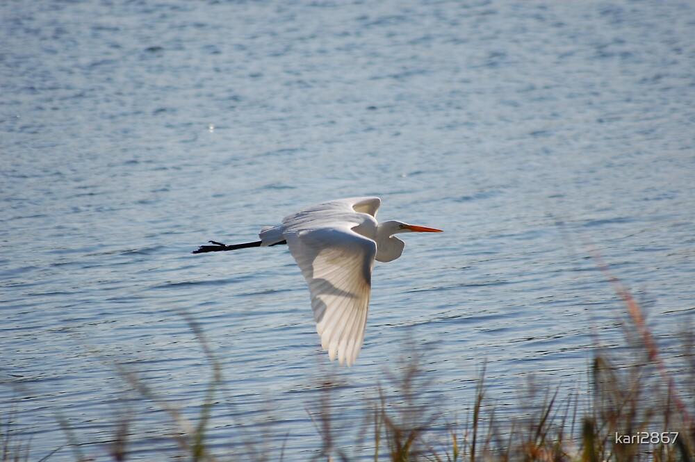 Egret in flight by kari2867