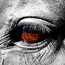 Horse's Eye by Dennis Jørgensen