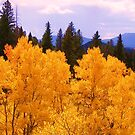 Quaking Aspens by Thomas Stevens