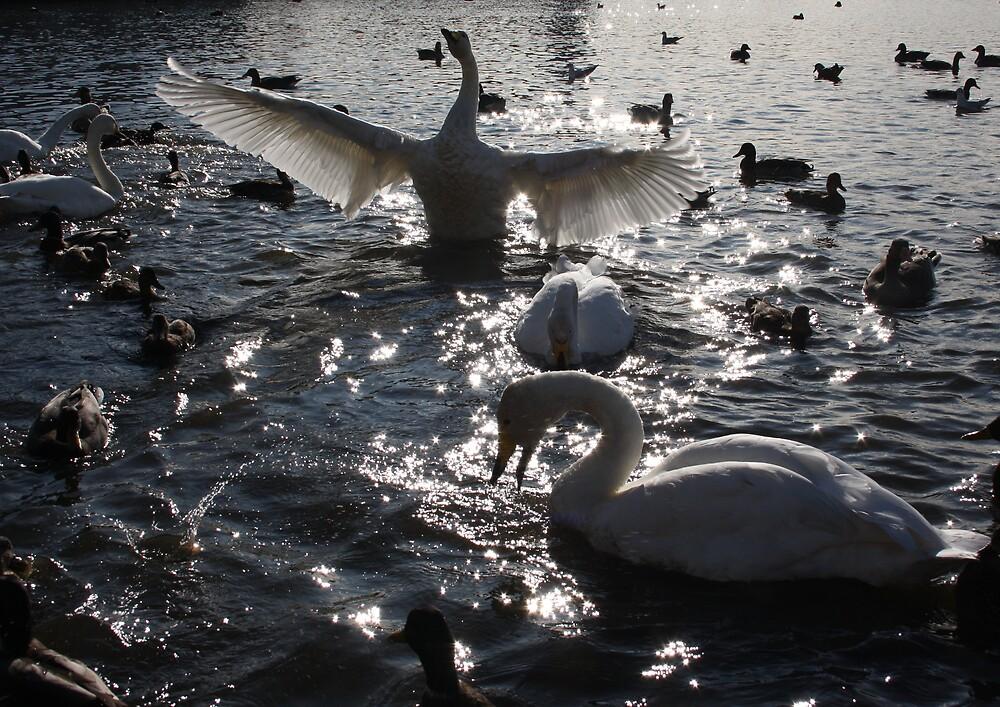 Swans by astadeilifu78