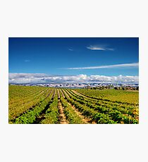Mclean Vineyard Photographic Print