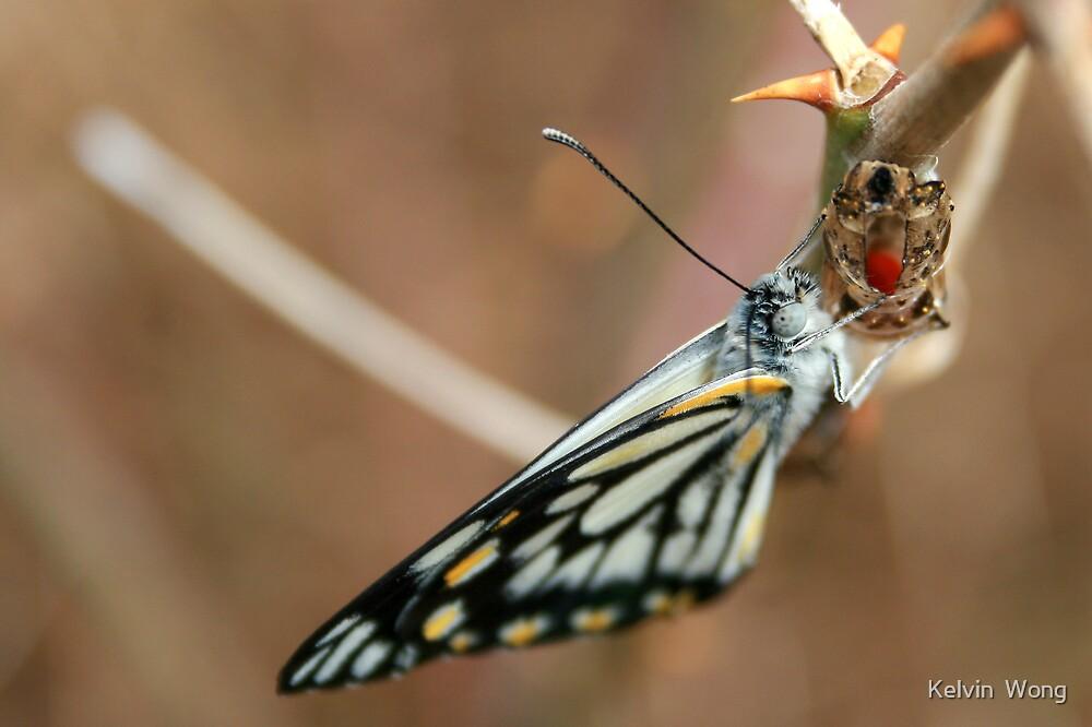 Butterfly by Kelvin  Wong