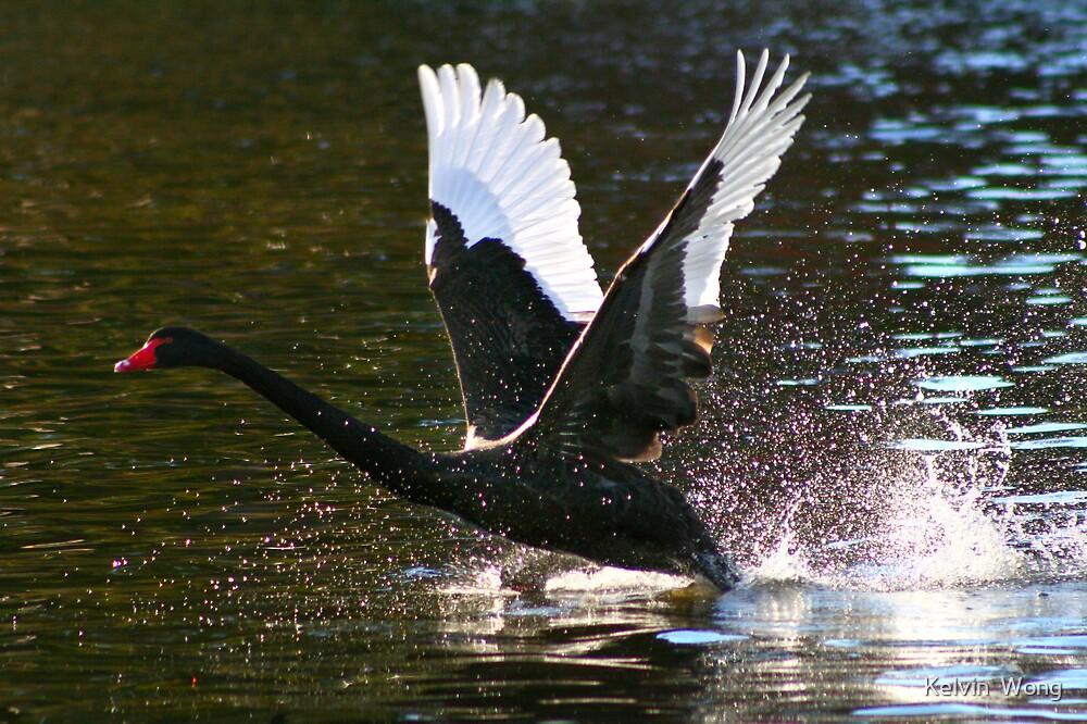 Landing by Kelvin  Wong
