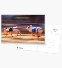 Pig Racing Postcards