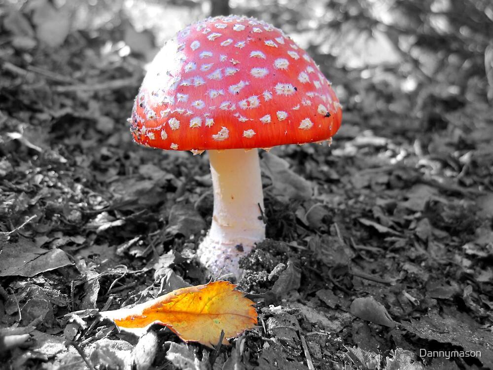 mushroom by Dannymason