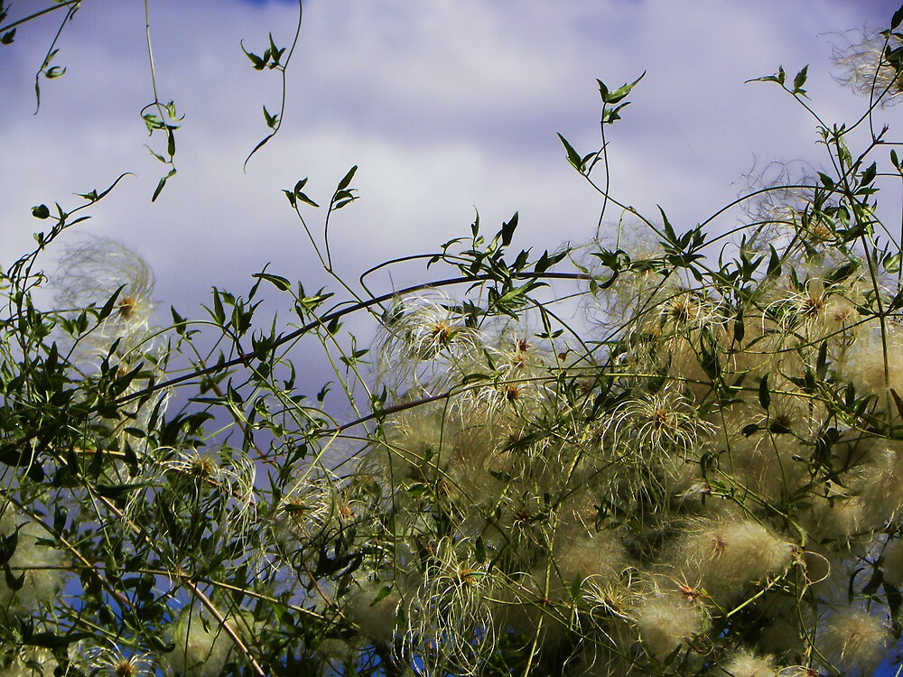 Apache Plume by gcampbell