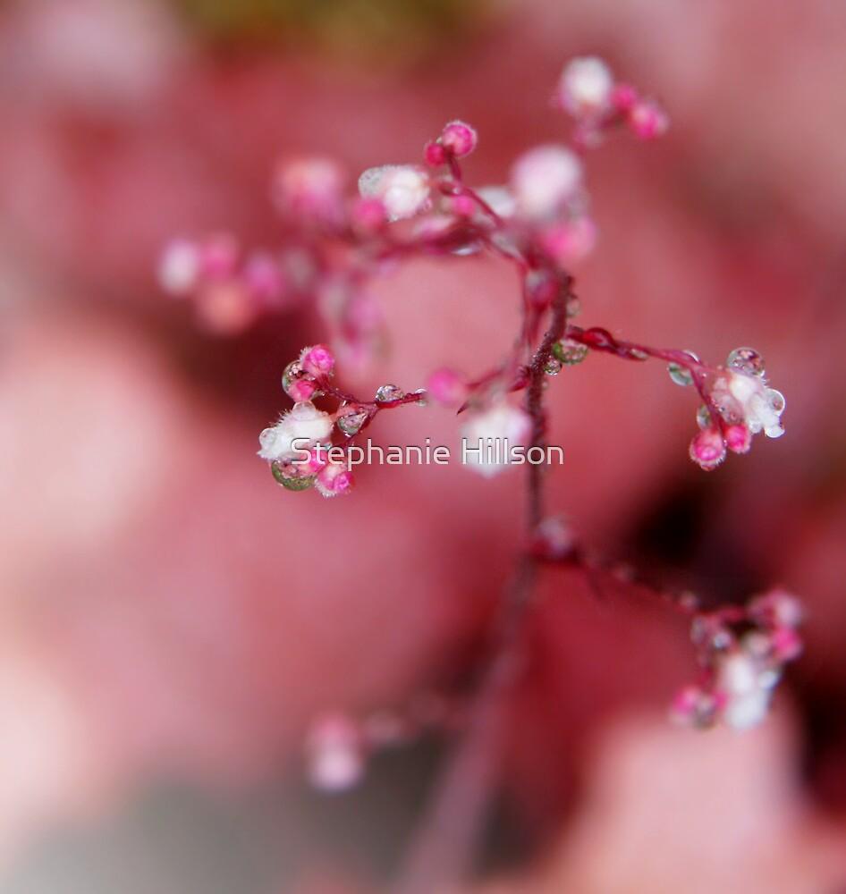 Pink Rain by Stephanie Hillson