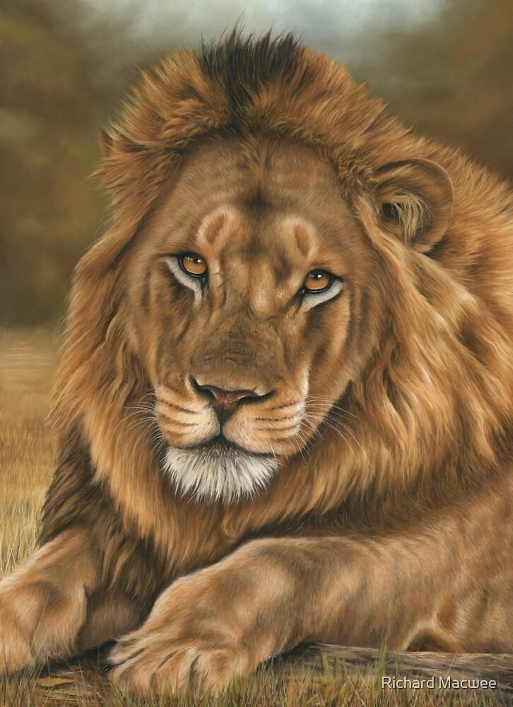 Lion by Richard Macwee