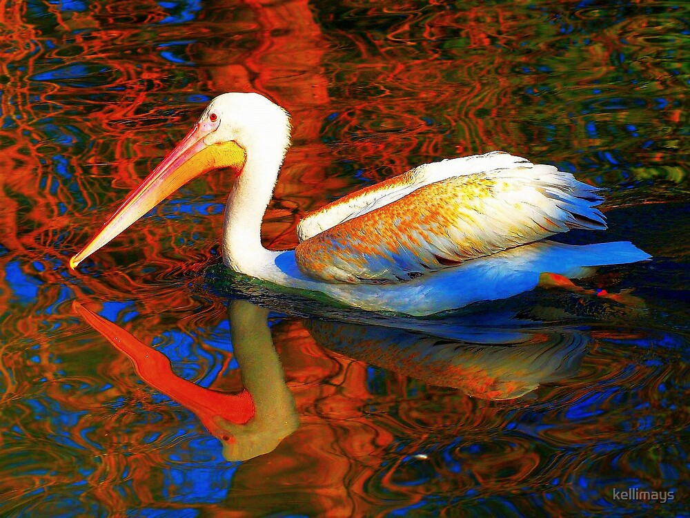 Mirrored Image of a PELICAN and it's surroundings by kellimays