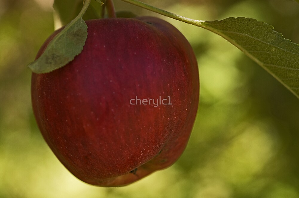Apple for the picking by cherylc1