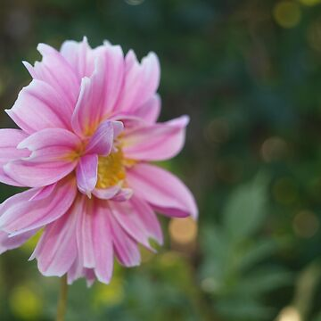 Pink flower on lush green background. by seriouslydaft