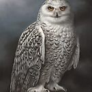 Snowy Owl by Richard Macwee