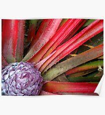Botanical Wonder Poster