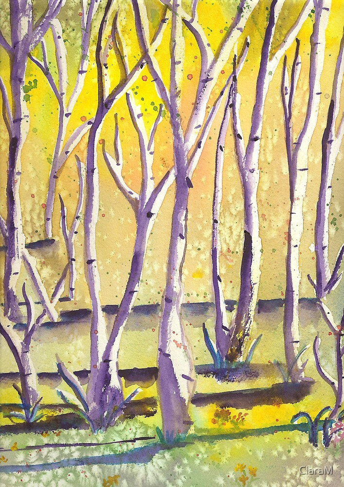 Birches by ClaraM