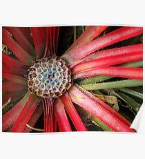 Exotic Botanical no.2 Poster