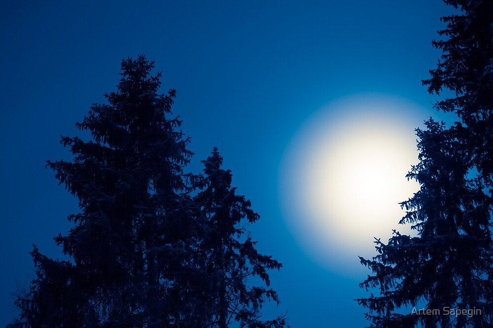 Moon Over Conifers by Artem Sapegin
