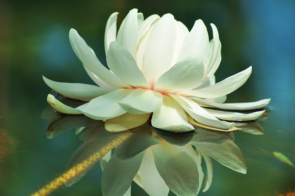 lily by Princessbren2006