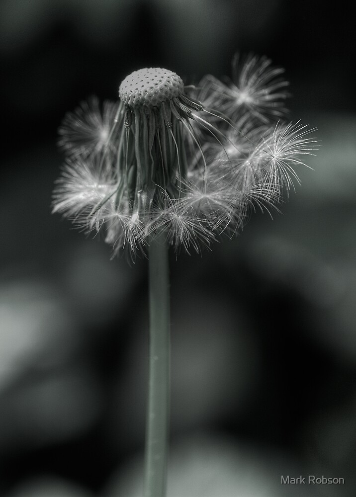 Gone To Seed by Mark Robson