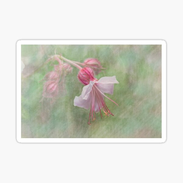 Pink Cranesbill Geranium Sticker