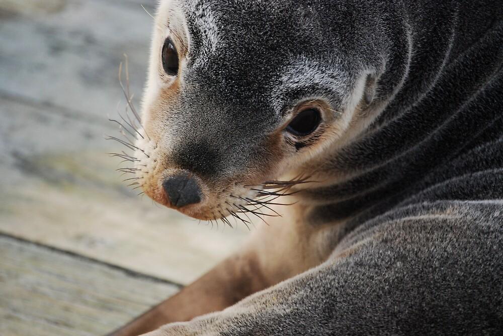 seal by Princessbren2006