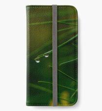 rain drop on pine bough iPhone Wallet/Case/Skin