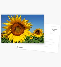 Sunshine of my Life Postcards