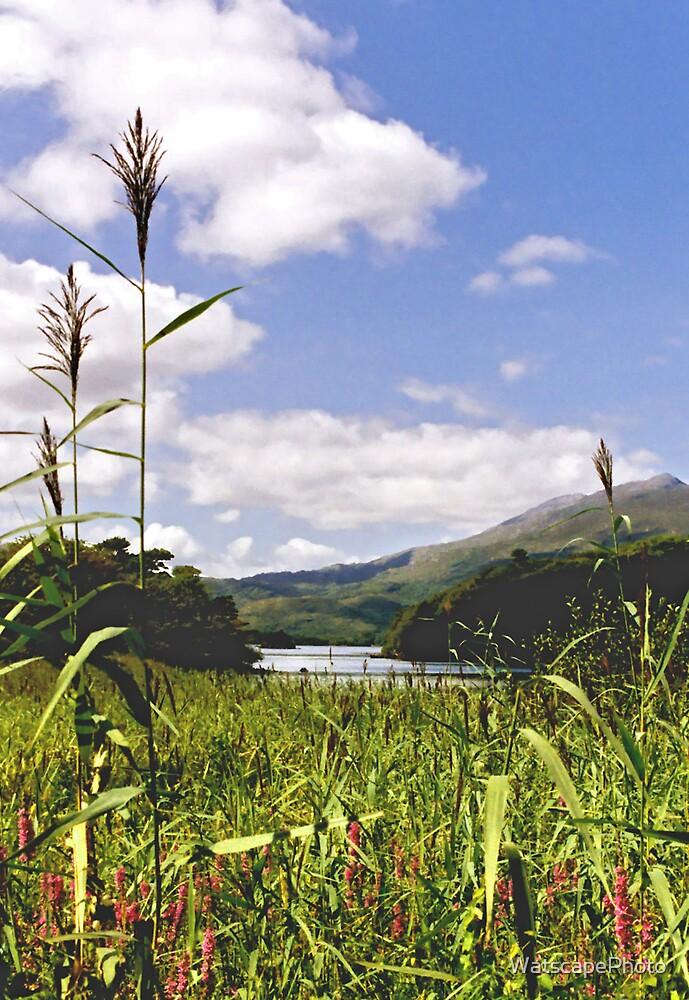 Supergrass by WatscapePhoto