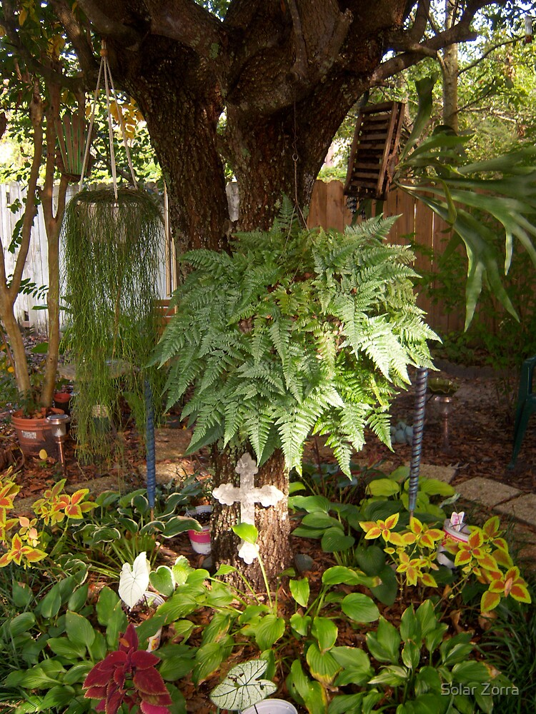 What are the common names of these three ferns? by Solar Zorra