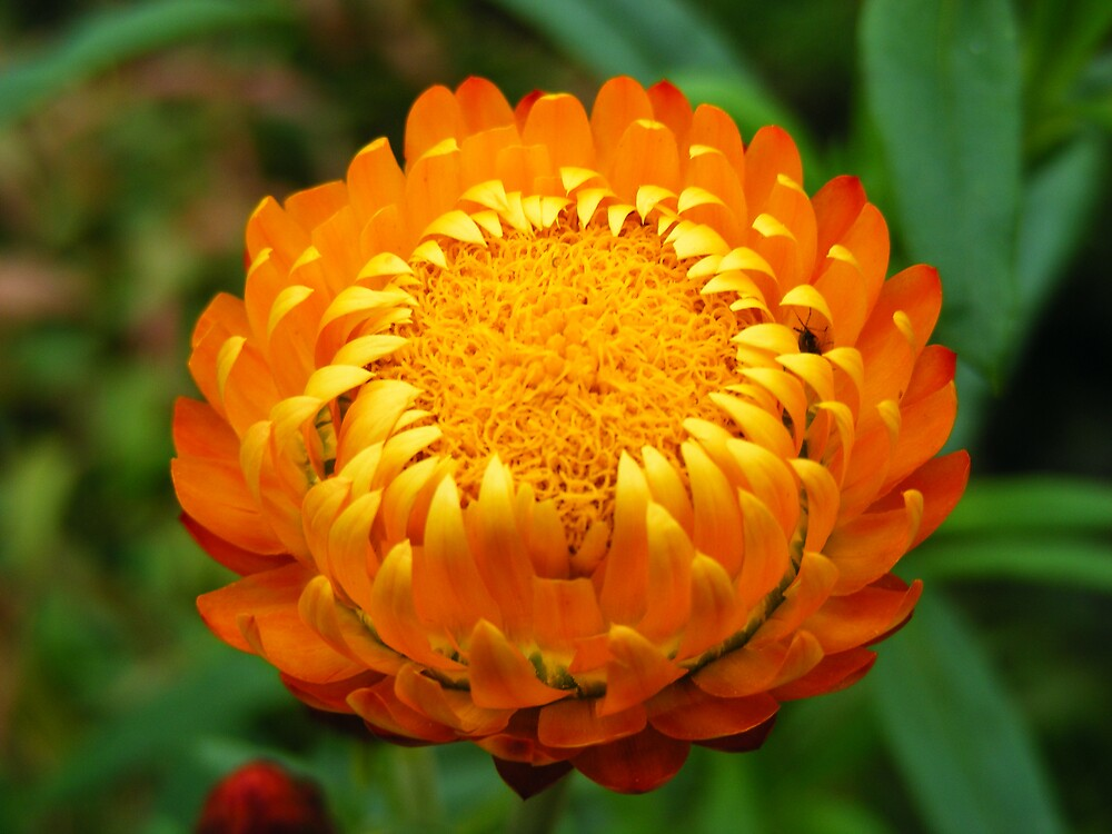 Orange flower with bug by MeJude