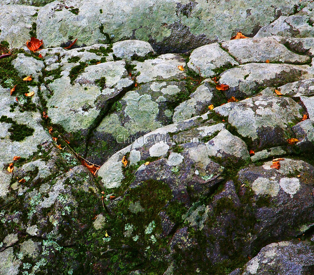 LEAVES AND LICHEN ON BOULDERS by Chuck Wickham