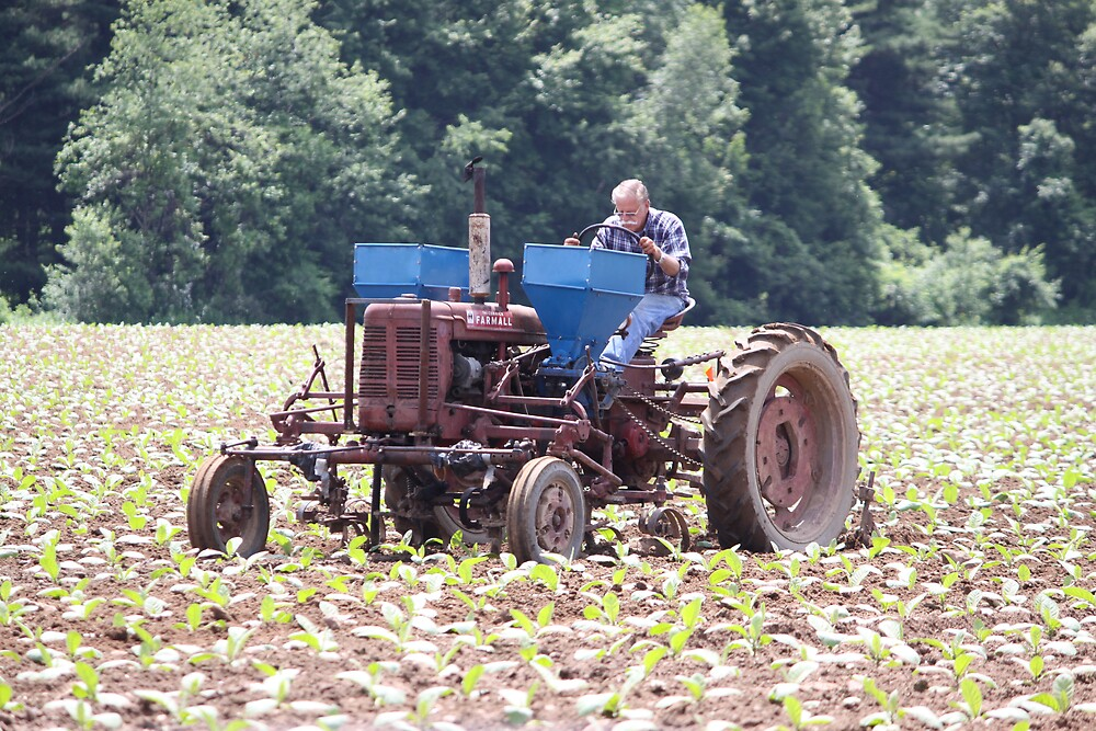 Tobacco Crop Will be Good This Year by NeNe55