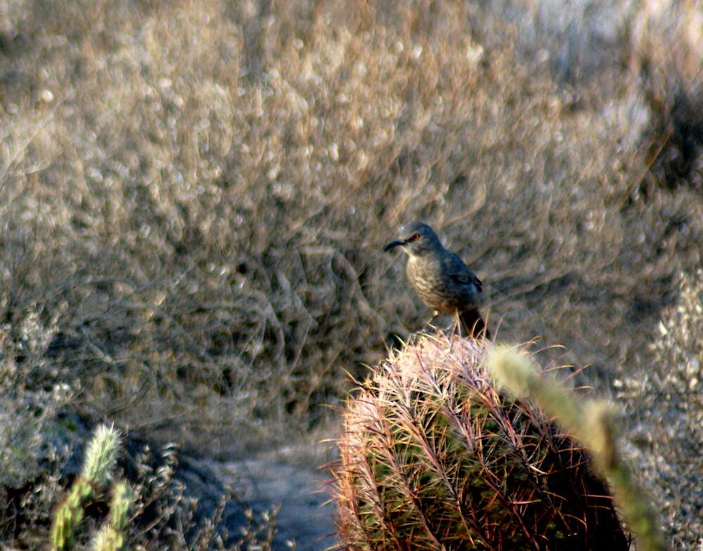 Desert solitude by Bonnie Pelton