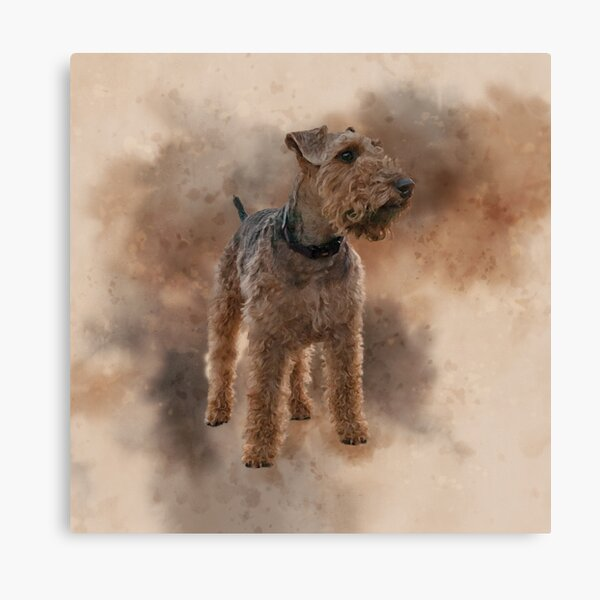 Welsh Terrier Canvas Print